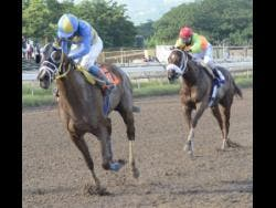 CHACE THE GREAT, ridden by jockey Dane Nelson, wins the 31st running of the 'Glen Mills O.J.' Caribbean Sprint Championship  on The Burger King Super Stakes Race Day at Caymanas Park on Saturday, November 10, 2018.