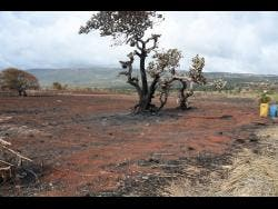 Farm areas of Flagaman, St Elizabeth, were destroyed by fire on Friday, August 16.