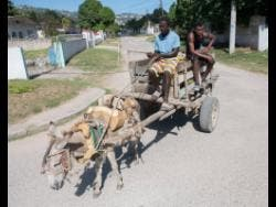 Junior Terrelonge (left) and Neil Powell sell coconuts from a donkey cart  in St Andrew on Sunday.