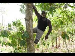 Andrew Nelson shows that even without legs, climbing trees is no issue.