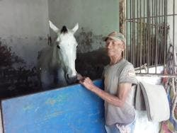 Vincent Campbell, a groom at Caymanas Park, in the stable with a race horse in his care.