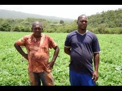 Walter Samuda (left) and Simon Christian in their field.
