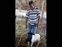 Hanief Baccas with one of his sheep.