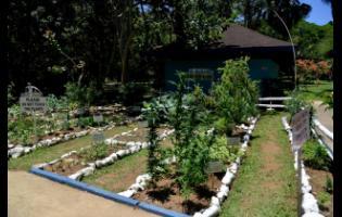 Miss Martha's Herb Garden