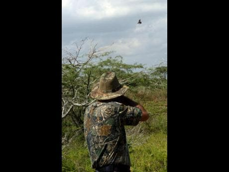 Court to summon minister in bird-shooting case   News   Jamaica Star