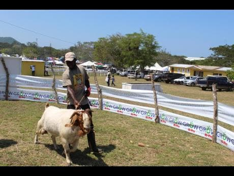 Leon Jackson photos The champion Nubian ram was a spectacle at the agricultural show.