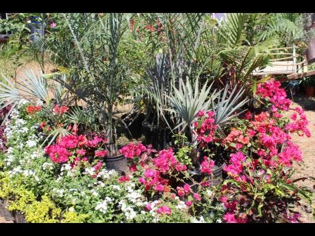 The horticultural display.