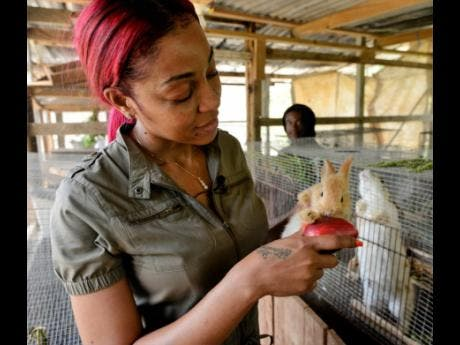 Eat up, little rabbit. D'Angel feeds one of the adorable animals with an otaheite apple.