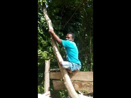 Omar Jolly, who hails from Bamboo district in Hanover, despite the limitations placed on him, is a landscaper.