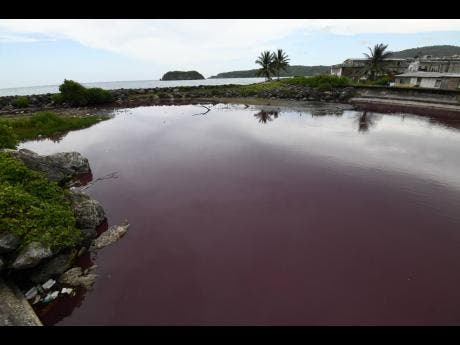 The Outram River in Port Maria, St Mary, is now blood red.