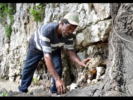 Kenyon Hemans/Photographer Leonardo Cushnie gathers stones from the side of a hill. He uses them to fill potholes along the Stony Hill main road in St Andrew.