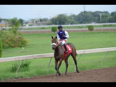 SHE'S A MANEATER, ridden by Omar Walker, wins the 41st running of the Superstakes at Caymanas Park in St Catherine on November 7, 2019.
