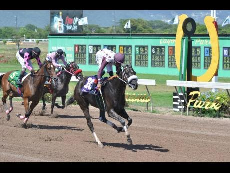 SERGEANT RECKLESS, ridden by Raddesh Roman, wins the fifth race, the St Cecilia Cup over five furlongs ahead of CAPTUREMYSHIP (second left) and NIGHT LIGHT at Caymanas Park on Saturday, August 31.