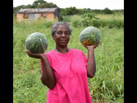 Wow! Two lovely watermelons. These produce are from Olive Thompson's field.