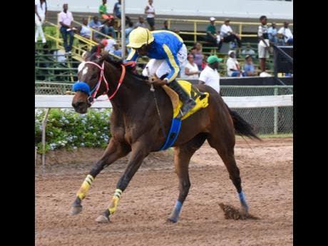 TRULY AMAZING (Aaron Chatrie) wins the sixth race at Caymanas Park on Saturday, January 4 2020. The four-year-old filly will be in action in tomorrow's second race.