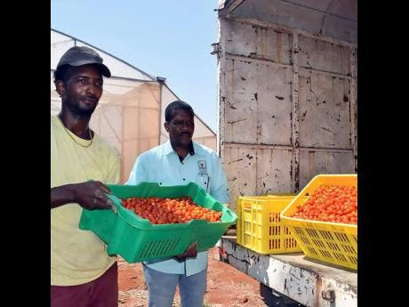 Farmers in St Elizabeth donated fresh produce to persons in the quarantine areas. The produce were collected by the Rural Agricultural Development Authority and distributed in conjunction with the Ministry of Labor and Social Security.