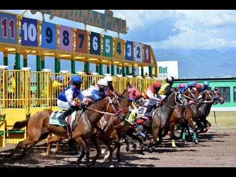 Horses leaving the starting gate at Caymanas Park.