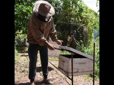 Spence tends to one of the hives in his apiary.