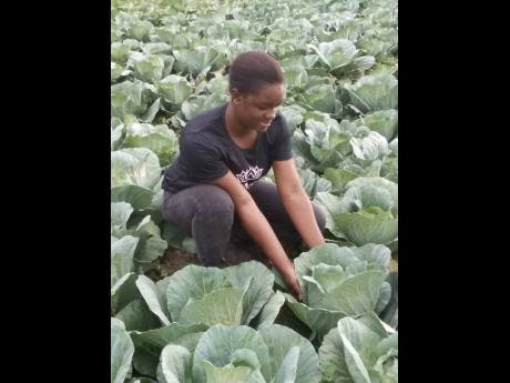 Farmer Girl Jessie is in love with farming. She is struggling to find market for her cabbage.