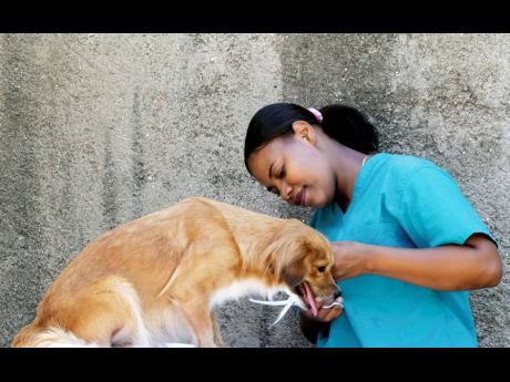 Deja Gordon takes care of a dog.
